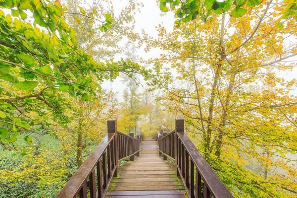 武岫農圃|銀杏|銀杏森林|南投景點|南投鹿谷|
