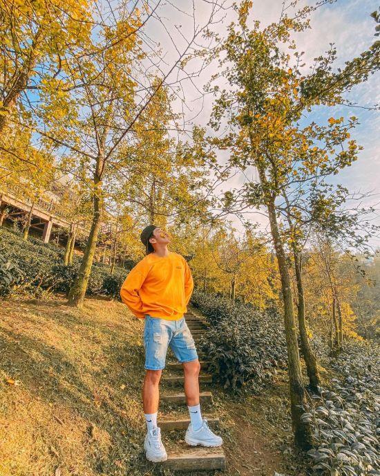 銀杏森林|南投景點|南投銀杏|
