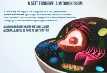 koronavirus-ellen-mitokondrium