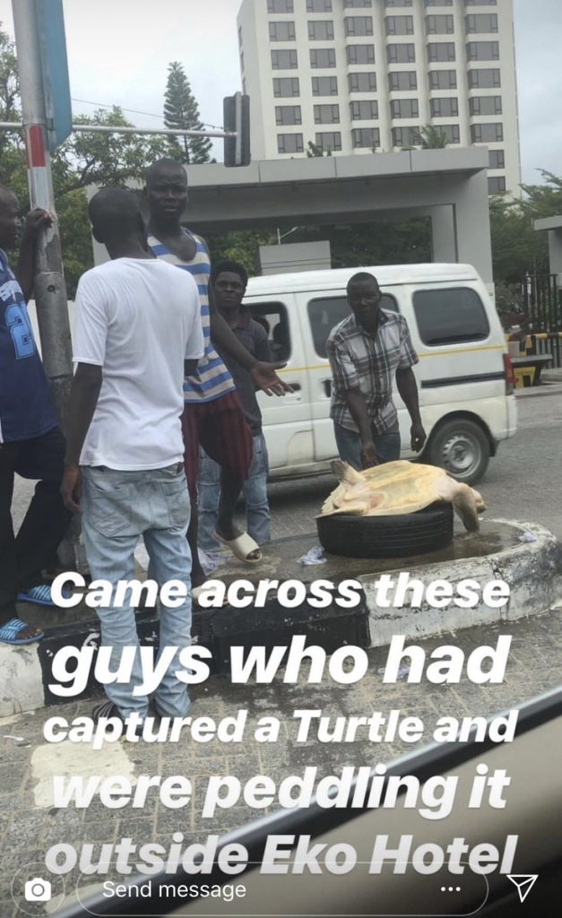 Woman Rescues Giant Turtle from sellers in Eko hotel, Returns It Back To The Sea