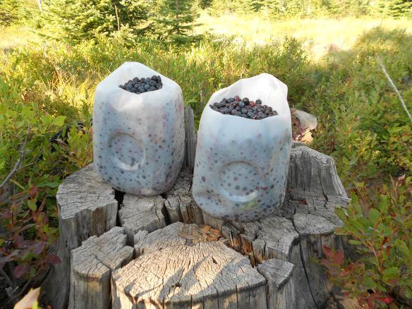 Jim's huckleberries