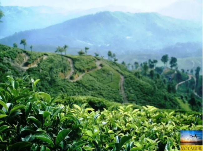 Darjeeling - Tea Country