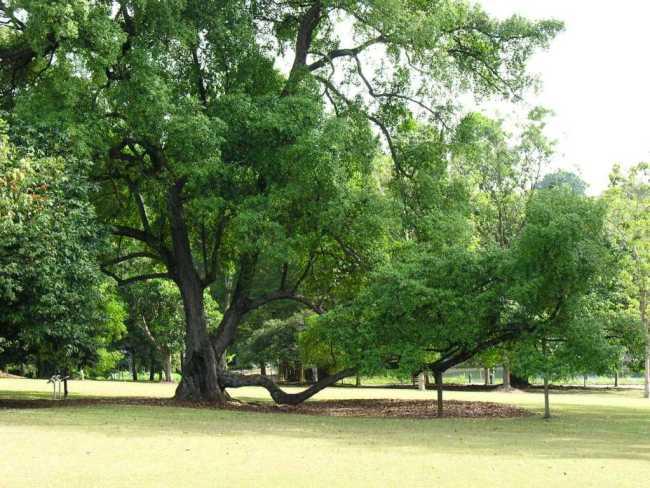 Singapore's iconic tree Terra Chips