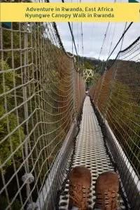 Adventure in Rwanda, East Africa Nyungwe Canopy Walk in Rwanda