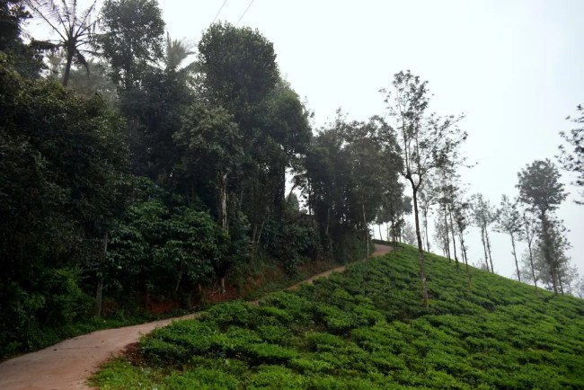 Imperial Heights Wayanad