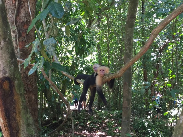Manuel Antonio Park - Monkeys everywhere!