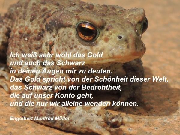 12 Erdkröte mit Gedicht 2