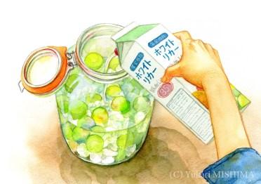 Making Sour Plum Wine(4/5)