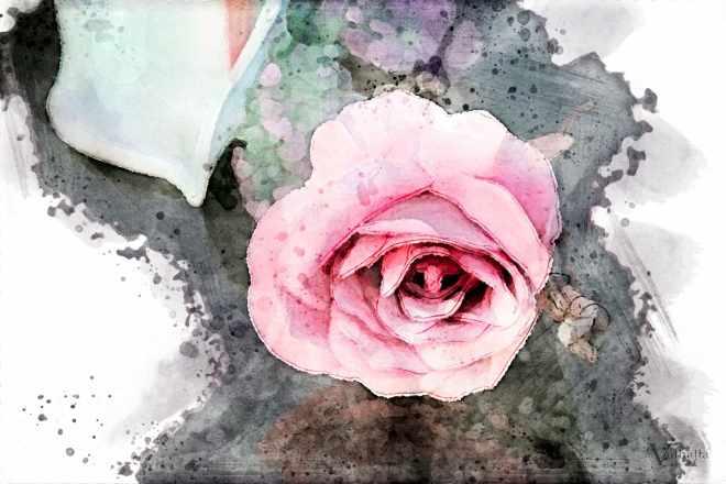 Funeral Flowers - Rose