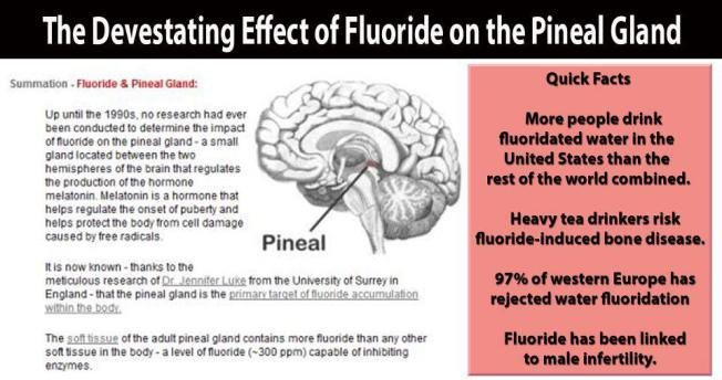 Image result for pineal gland fluoride