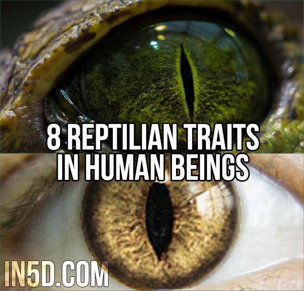 8 Reptilian Traits In Human Beings  in5d in 5d in5d.com www.in5d.com http://in5d.com/
