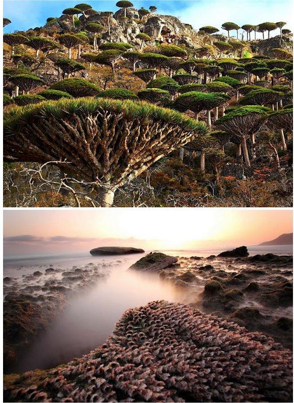 3. Socotra