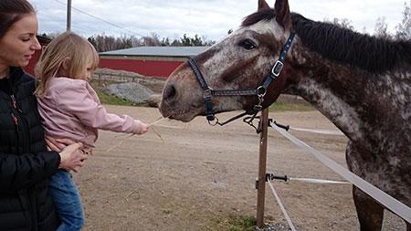 Tilde-och-häst