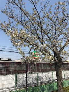 柴島浄水場の桜と阪急電車
