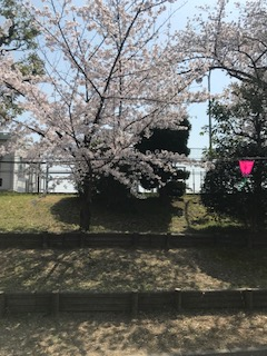 柴島浄水場で花見