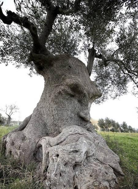 01 Bikin Takut aja Liatnya, 8 Foto Pohon ini Malah Terlihat Seperti Monster yang mau makan Orang!