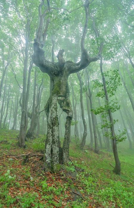 04 Bikin Takut aja Liatnya, 8 Foto Pohon ini Malah Terlihat Seperti Monster yang mau makan Orang!