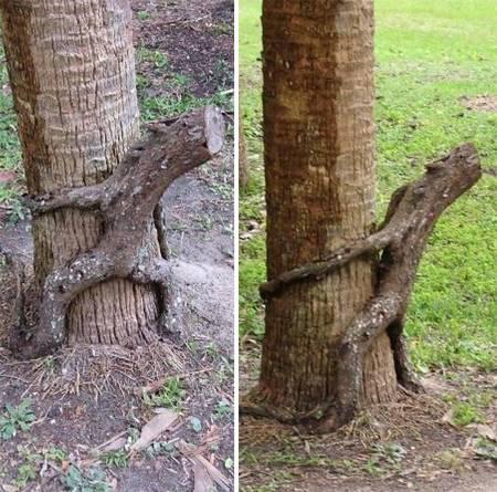 05 Bikin Takut aja Liatnya, 8 Foto Pohon ini Malah Terlihat Seperti Monster yang mau makan Orang!