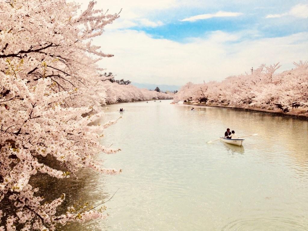 これから旅行を考えてる人へ「弘前桜まつり」