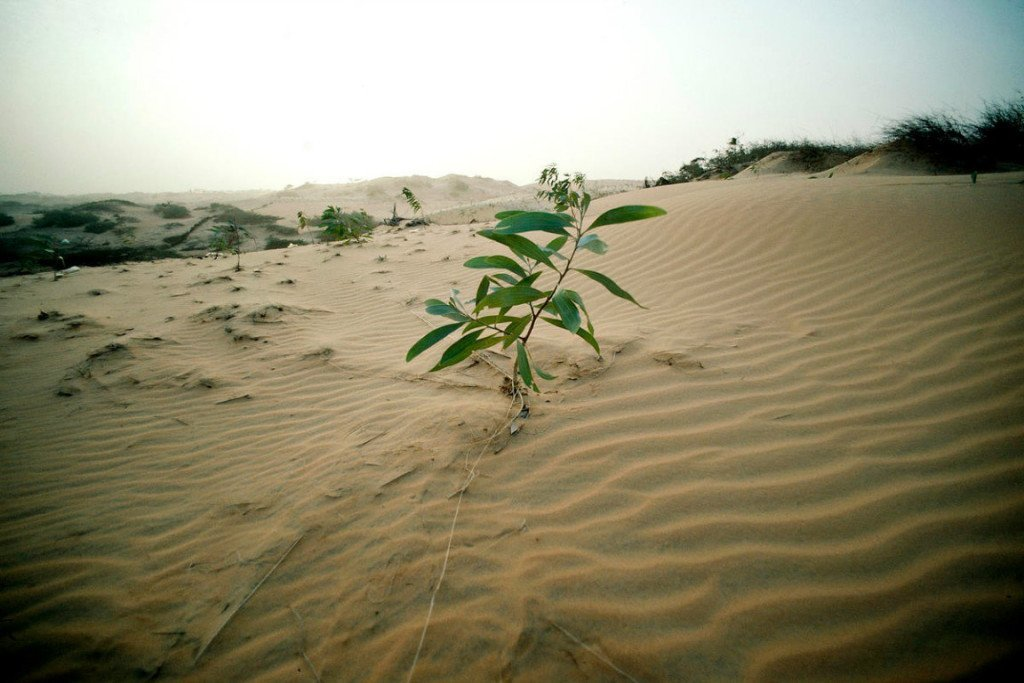 Eco-Pietism vs. Eco-Piety