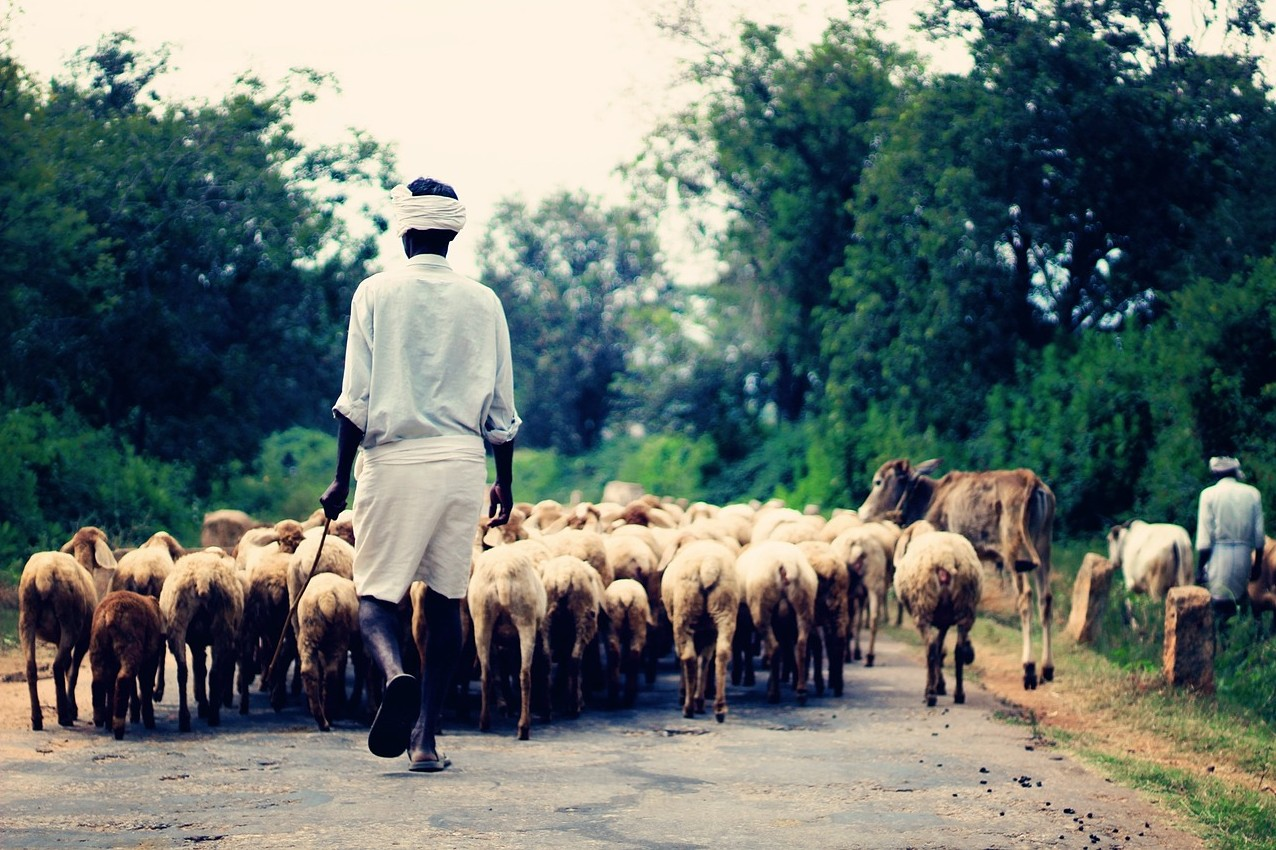 """Featured image for """"Shepherd Work"""""""