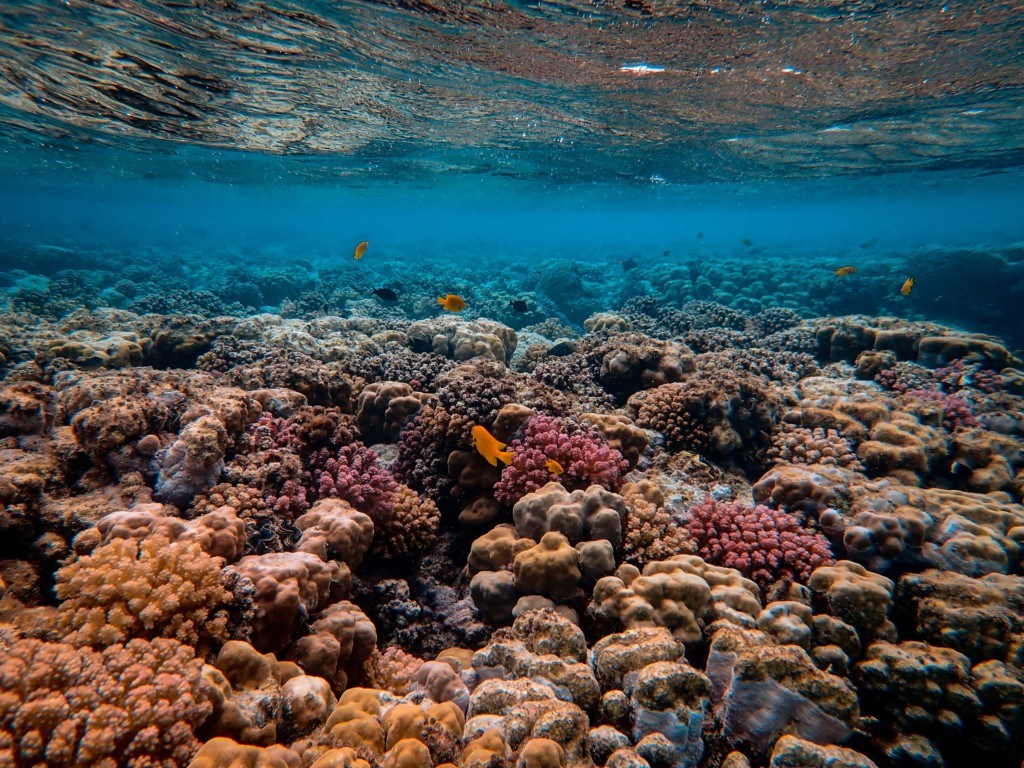 Coral Reefs, Climate Change, and Ecological Lament