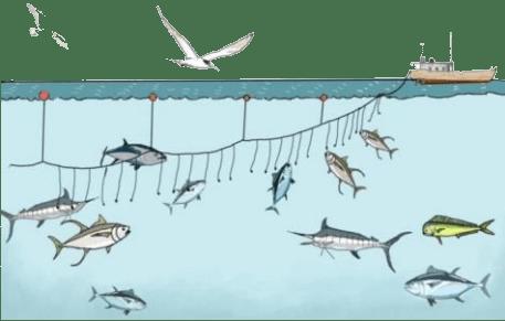 Penangkapan ikan dengan kapal jenis longline