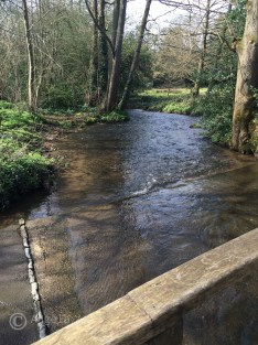 Shere stream: Looking upstream after first ford