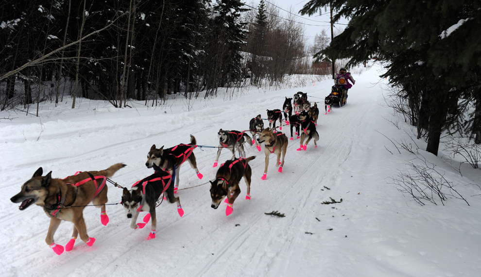 [The Big Picture] Giải Iditarod Trail Sled Dog Race 2012 (P1)