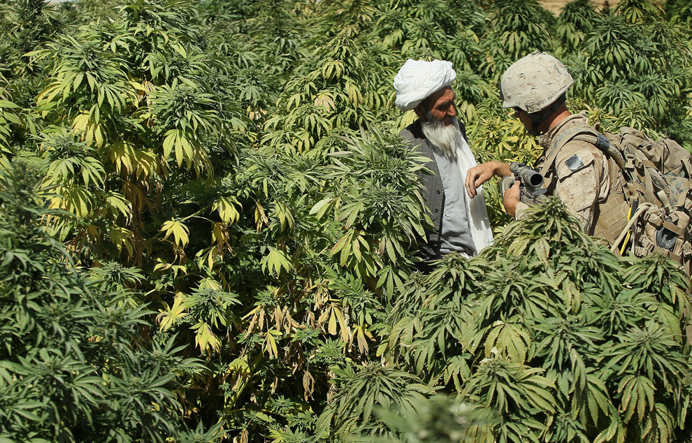 U.S. Marine Cpl. Jake Hoag of Bend, Oregon from India Battery, 3rd Battalion, 12th Marine Regiment questions a marijuana farmer while on patrol near Forward Operating Base (FOB) Zeebrugge on October 10, 2010 near Kajaki, Afghanistan.