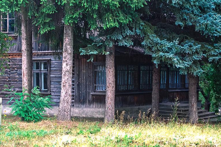 arbol-sombra-casa