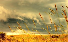 grass_by_jorlin1