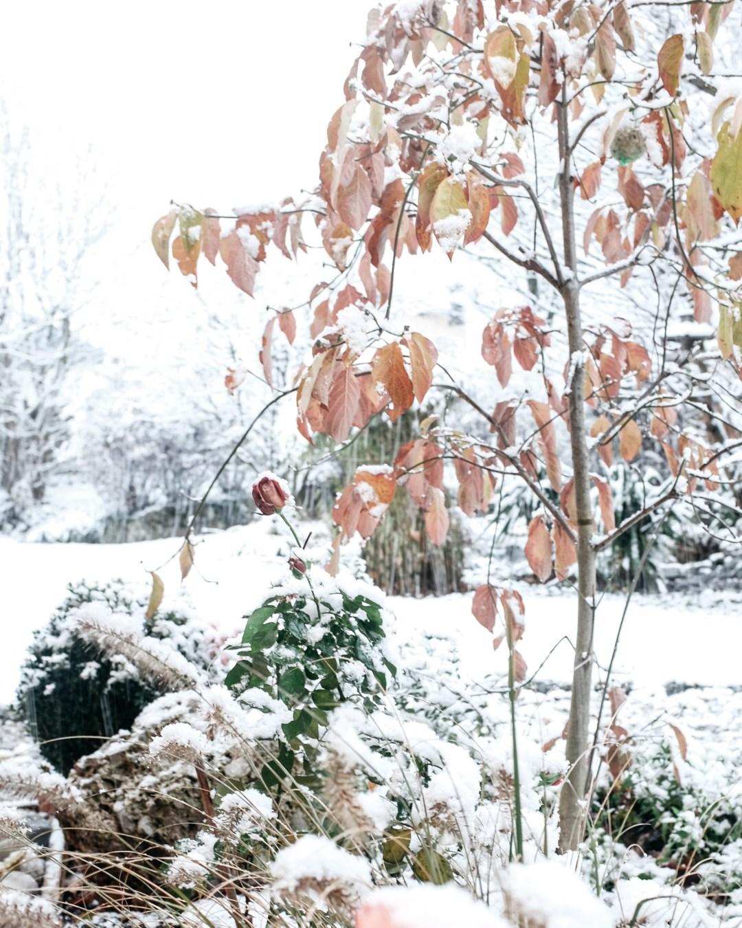ina stil inastil advent keksebacken garten schnee wintergarten gartenteich gartenliebe winterzauber winterwonderland christmastime weihnachtszeitDSCF0650