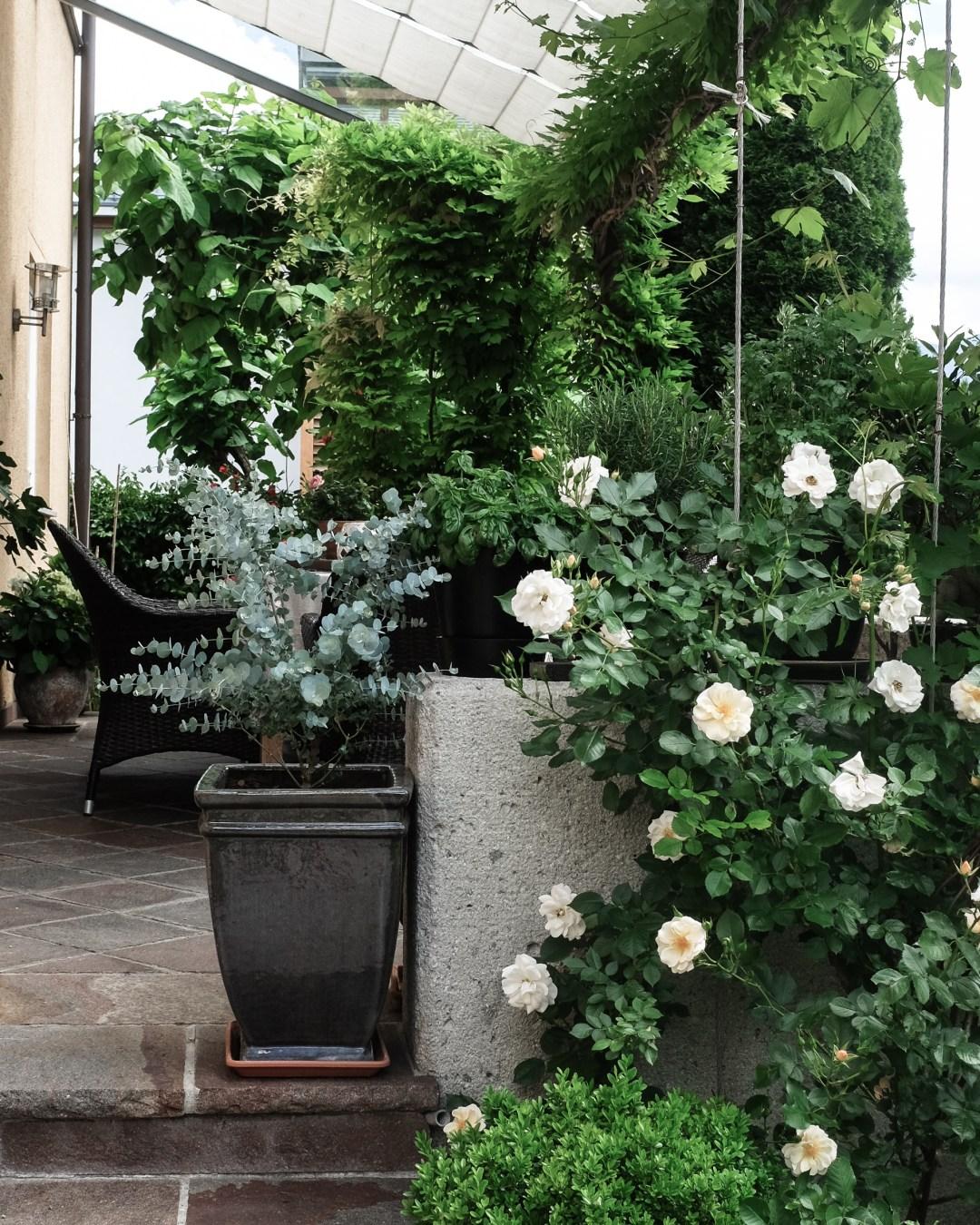 inastil, Ü50Blogger, mein schöner Garten, Sommergarten, Grillen, bestes Grillhähnchen, Sommertisch, toskanisches Platthuhn Rezept, outdoorliving, Rosen, Gartenblicke-15