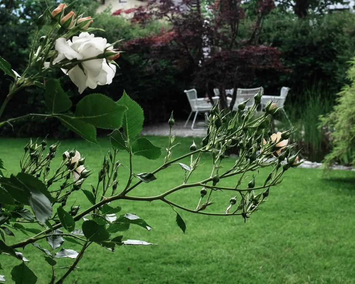 Sommer Garten Ein Köstliches Grillrezept Inastil