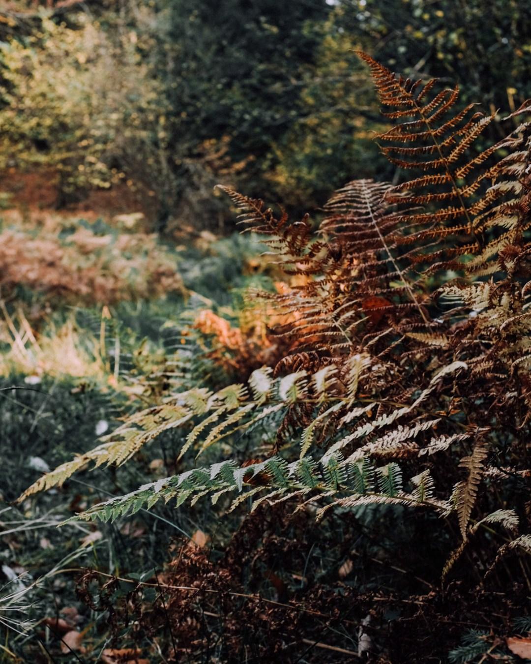 Inastil, Herbstinspiration, Herbst, Schokobrownie, Karamell-Schoko-Brownie, Cozy, Interior, Herbstblumen, Herbstdekoration, Backen, Natur, Waldspaziergang-11