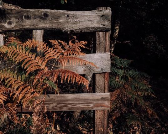 Inastil, Herbstinspiration, Herbst, Schokobrownie, Karamell-Schoko-Brownie, Cozy, Interior, Herbstblumen, Herbstdekoration, Backen, Natur, Waldspaziergang-15