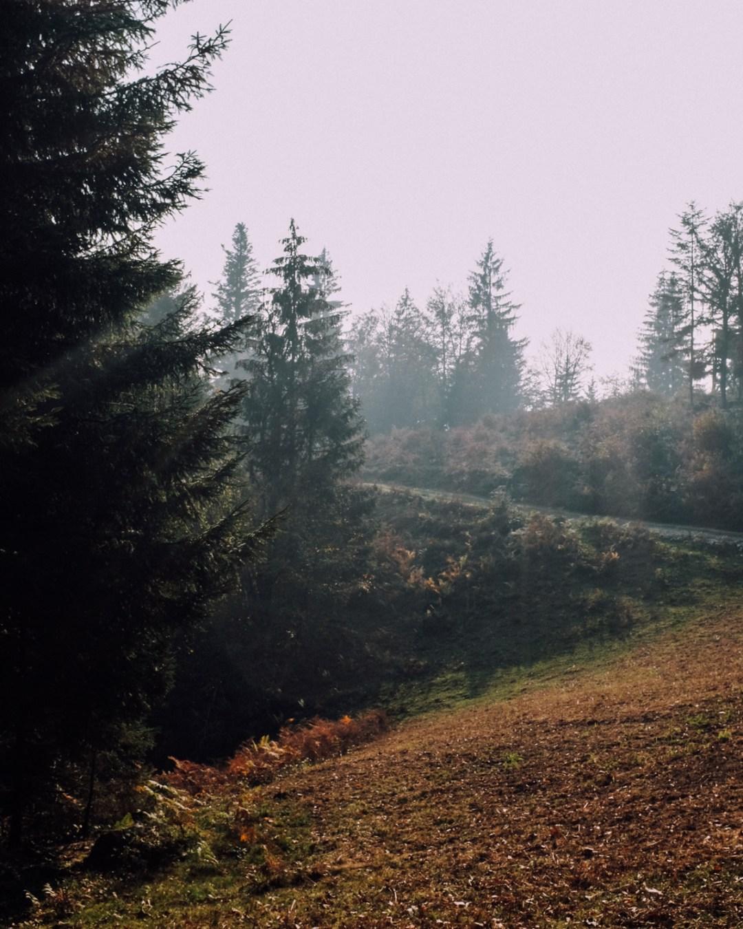 Inastil, Herbstinspiration, Herbst, Schokobrownie, Karamell-Schoko-Brownie, Cozy, Interior, Herbstblumen, Herbstdekoration, Backen, Natur, Waldspaziergang-16
