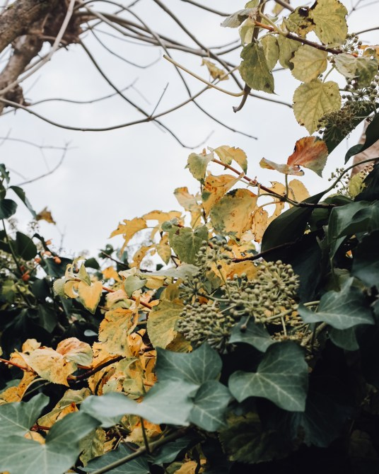 Inastil, Novemberstimmung, Garten, Beleuchtung, ZirbenLüfter, Lampen, Stimmungslicht, Interieur, Herbststimmung,_-6