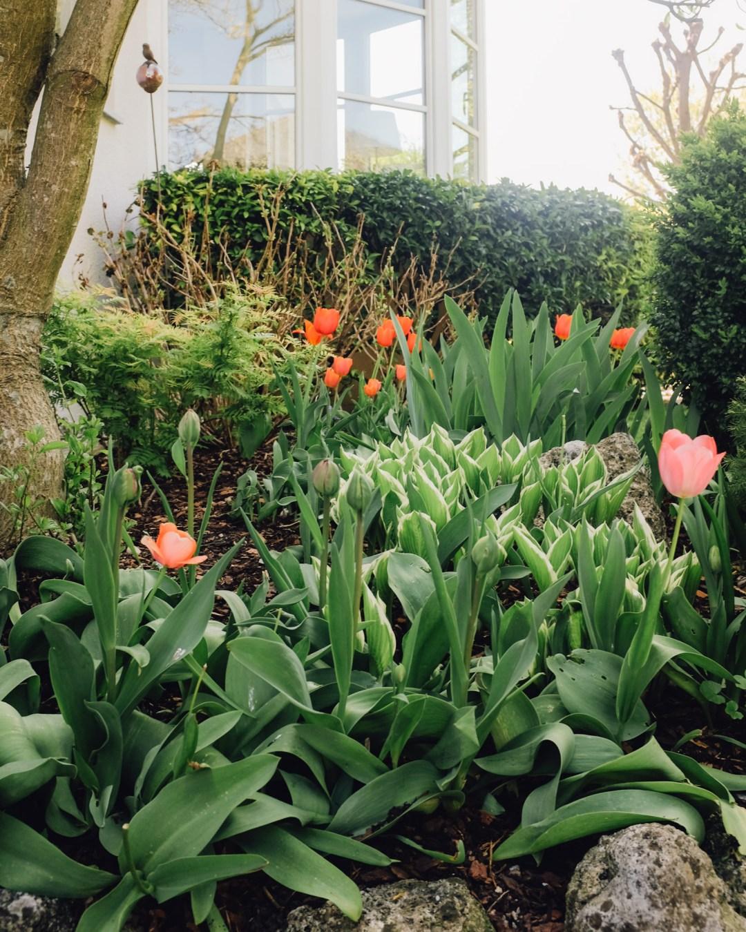 Inastil, Frühling2020, Raumduft, Raumspray, Wäschespray, Zirbenlüfter, Garten, Frühlingsgarten, Tulpen, Gärtner, Gartentipps, Ü50Blogger, Gartenliebe-9