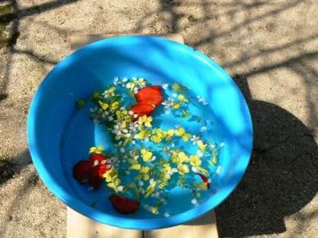Palm Sunday 2014 Croatia - Flower water basin