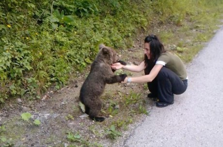 Bear cub found outside the village of Kuterevo looking for food and mother