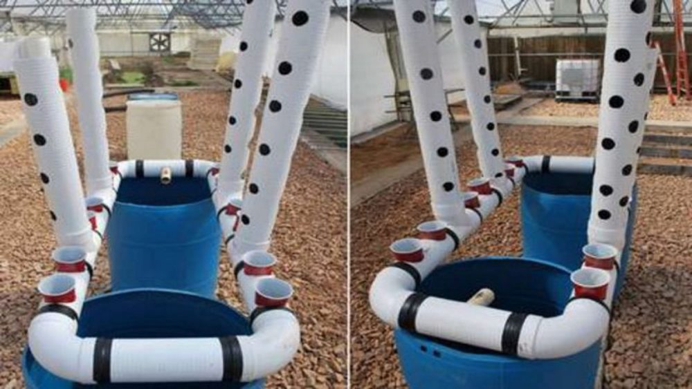 DIY PVC Aquaponic System