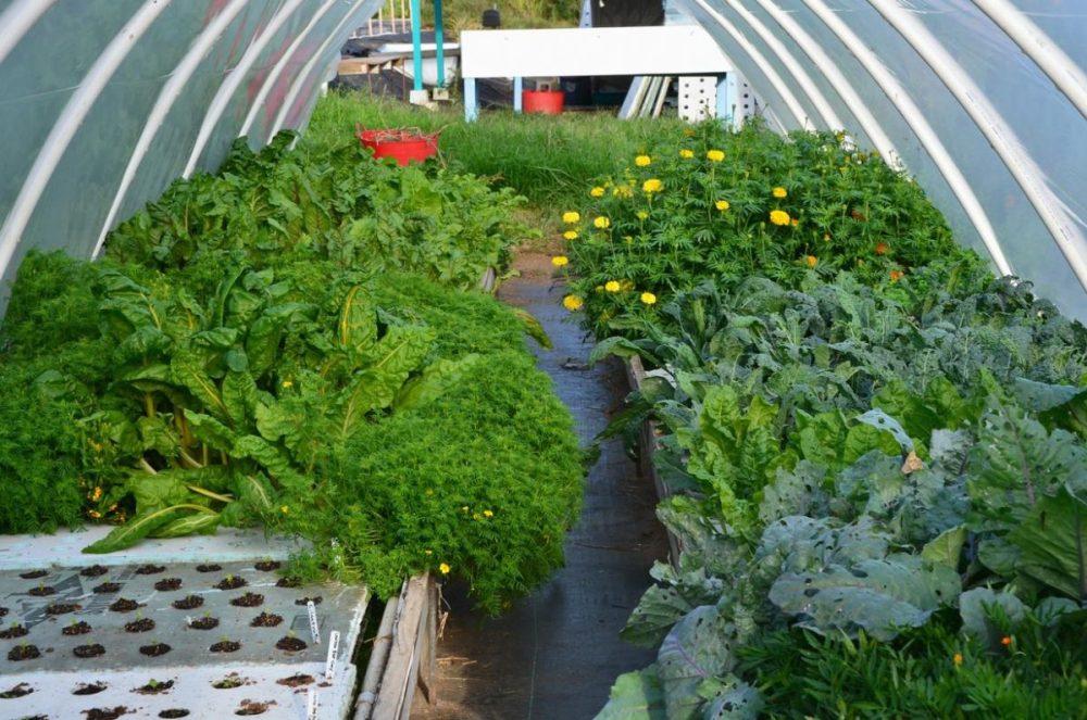 Farming Aquaponic in the Backyard