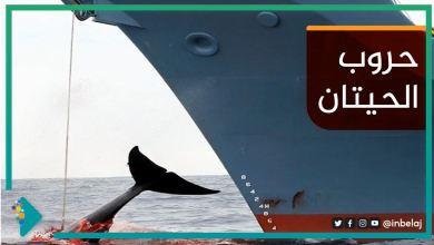 صورة حروب الحيتان