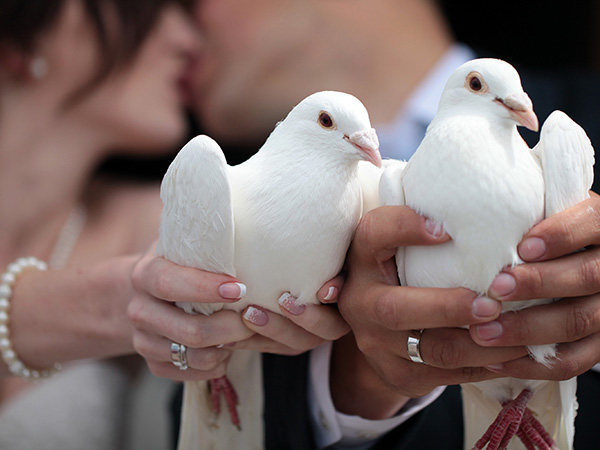 Hochzeitstauben Berlin - das Symbol für die ewige Liebe