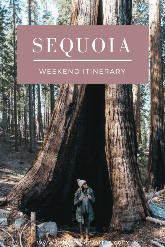 SEQUOIA WEEKEND ITINERARY_ IN BETWEEN LATTES