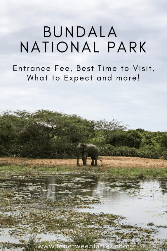 Bundala National Park_ Entrance Fee, Best Time to Visit, What to Expect and more!