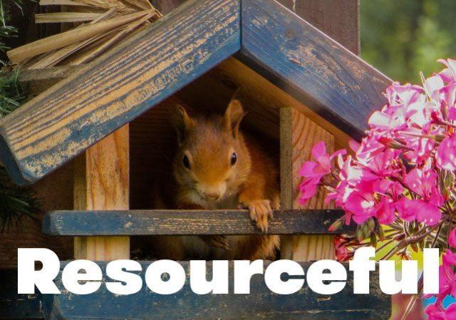 resourceful-squirrel