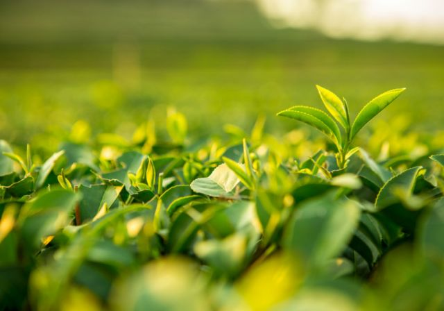 Image result for AgriTech In India: How Startups Are Changing The Face Of Indian Agriculture